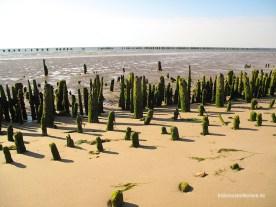 Ostanleger Wangerooge 4