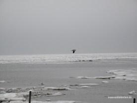 Winterflug