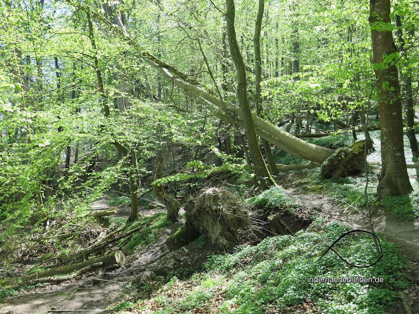 Wald Sigum