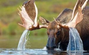 Eland+water