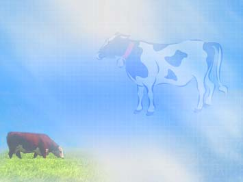 Cow 02  PowerPoint Templates