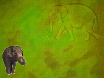 Elephant 05  PowerPoint Templates