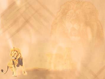 Lion 02 PowerPoint Templates
