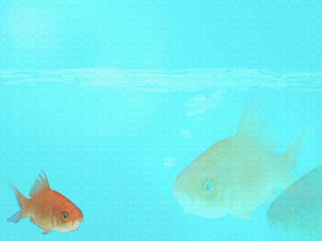 Fish 14  PowerPoint Templates