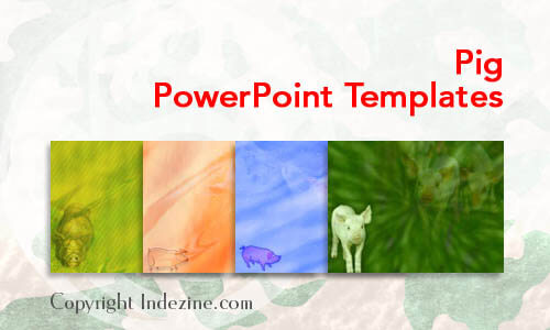 Pig PowerPoint Templates
