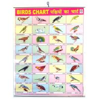Large Birds-Chart-Poster (57 x 45cm) for the Wall ...