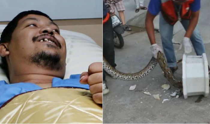 OMG Python emerges from toilet bites Thai mans penis