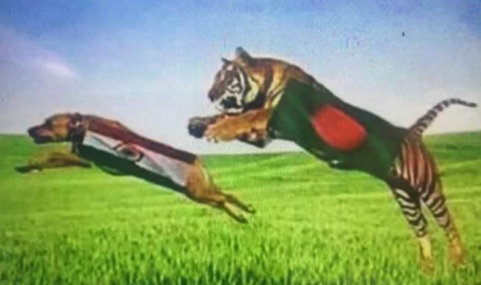 Icc Champions Trophy 2017 Hd Wallpaper India Vs Bangladesh Semi Final Match Dubbed As Dog Vs