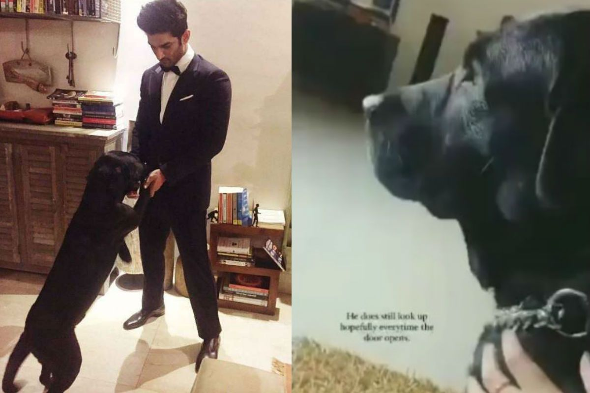 Sushant Singh Rajput's Dog Fudge's Heartbreaking Video, Niece Says he Looks at The Door Everytime it Opens