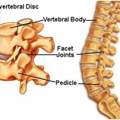 Human Spine Diagram Bones Vertebrae Control Wiring Diagrams Hvac Radiculopathy,lumbar Cervical Radiculopathy Surgery India Mumbai