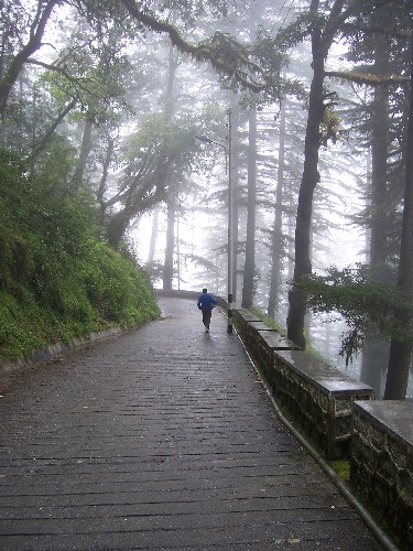 Landour road  India Travel Forum  IndiaMikecom