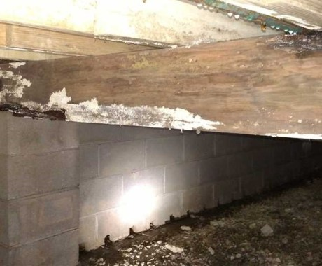 Wood Rot vs. Mold: Is There a Difference?