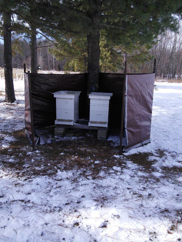 Beekeeping Tips for November