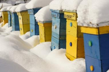 Beekeeping Tips for January
