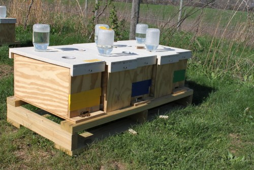Nucleus Colony (Nuc). Image courtesy of Bastin Honey Farm