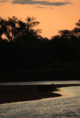 Limpopo River Sunsets.