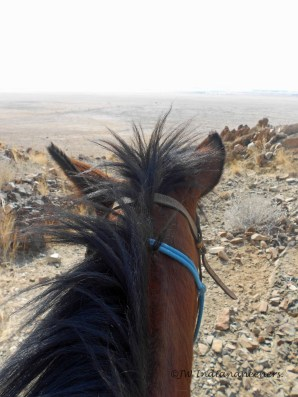 Through the horses ears.......wide, open space as far as the eye can see......the perfect place to explore by horse!