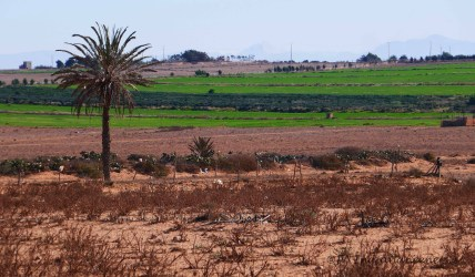 The fertile lands of the Souss with its abundance of agricultural produce.