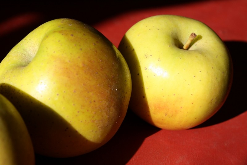 Gold Rush Apples - Tuttle Orchards Inc: Indianapolis Apple Orchard ...
