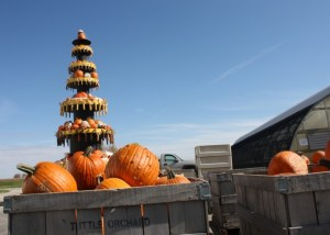 PUmpkins to Pick in Indianapolis