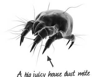 content-big-house-dust-mite-asthma-allegens-indianbureaucracy