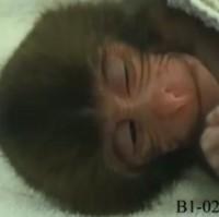 baby monkeys_indiabureaucracy