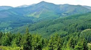 Afforestation Fund-Indian Bureaucracy