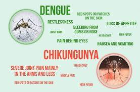 Chikungunya – 2016 function-Indian Bureaucracy