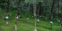 Rubber Soil Information System for Rubber Growers -Indian Bureaucracy