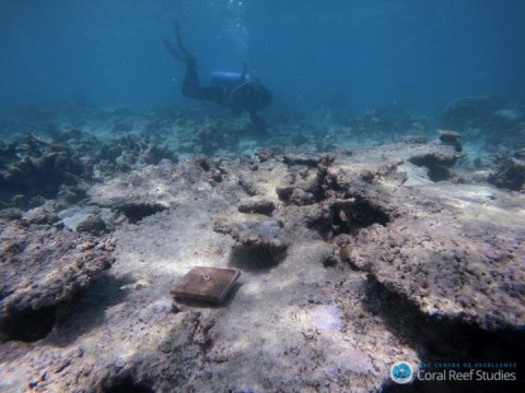 Global warming disrupts recovery of coral reefs