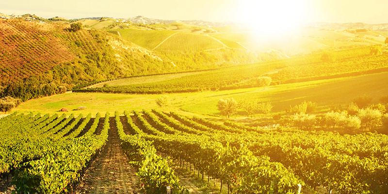 Shift to more intense rains threatens historic Italian winery