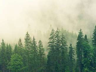 Sharing data for improved forest protection and monitoring