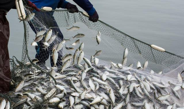 Effective Control and Management of Resources in Fishing Sector