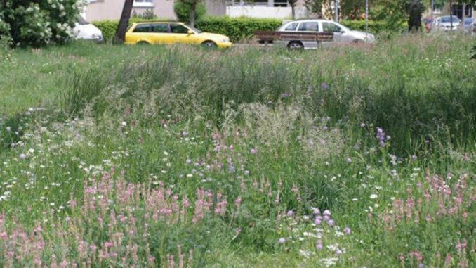 How quickly do flower strips in cities help the local bees