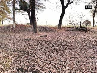 Locust control operations conducted
