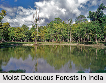 Eastern Highlands Moist Deciduous Forests