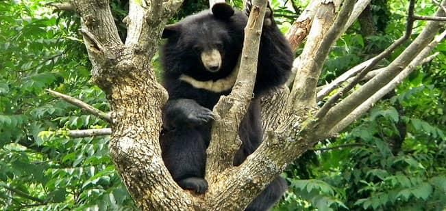 Dachigam National Park  Dachigam Wildlife Sanctuary  IHPL