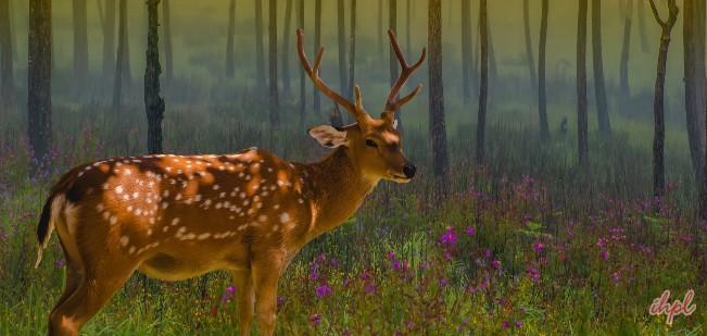 Image result for sundarban national park