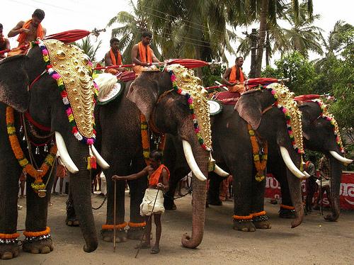 Great Elephant Race
