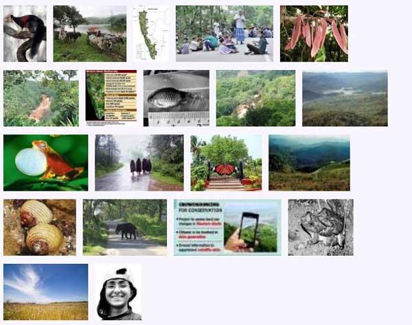 west_ghats_ecology_animals_screenshot_04