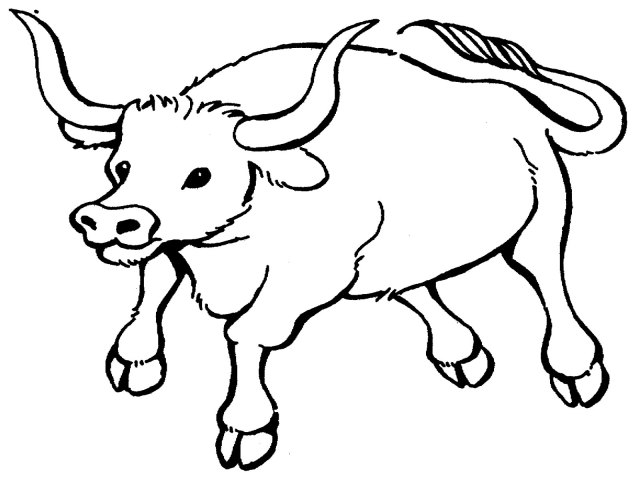 Coloring Pages  Bull Coloring Pages Printable Realistic Coloring