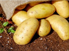 ITC vegetable, fruits to be available in seven metros in next three years
