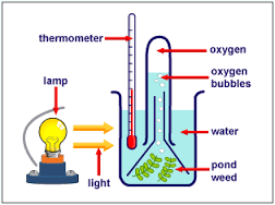 Diagram Of Nahco3 How Oxygen Is Evolved By Green Plants In An Experiment On