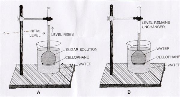 Demonstration of Osmosis process by a simple experiment