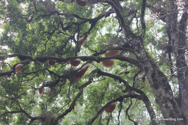 Honey Bee tree in Munnar