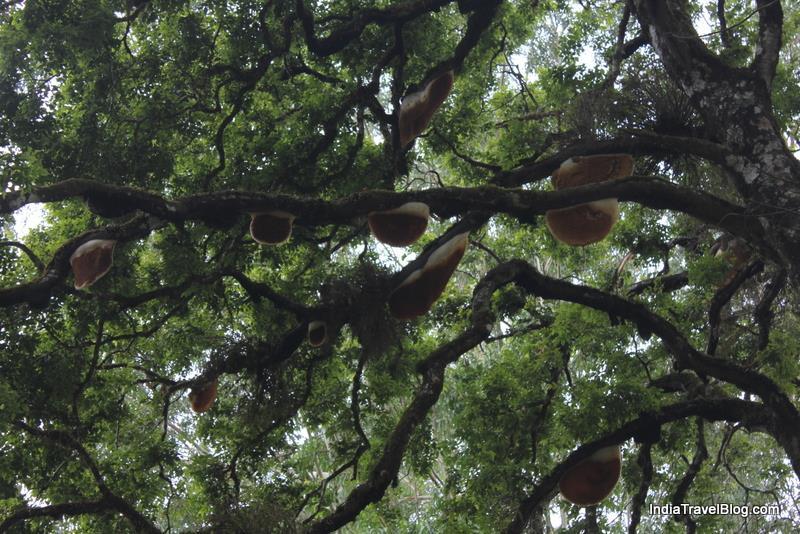 Hives Of Wild Honey Bees