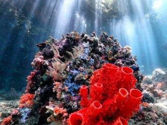 scuba-poetry