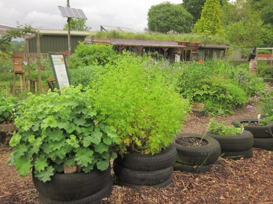 Offshoots herb tyres