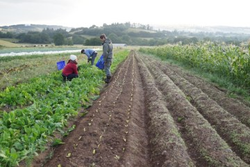 Brexit Farming