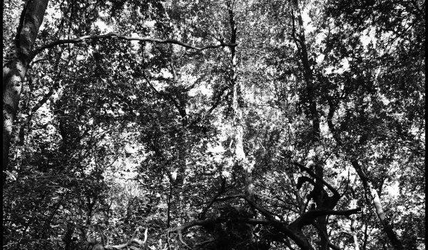 [EP] KosmoSuna – Théiaphée Part I